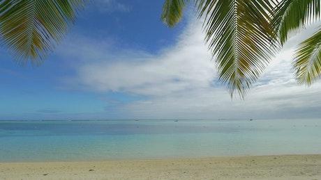 Resting below a Palm
