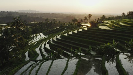 Rice terrace filled with water, aerial shot