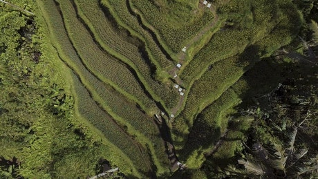 Rice terraces on Bali, aerial tilt shot