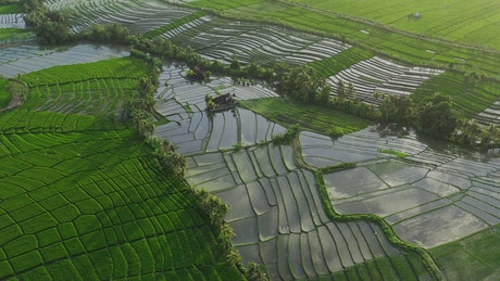 Rice terraces with water in the countryside