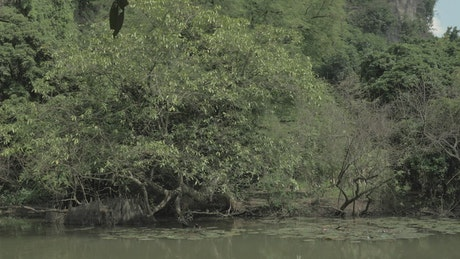 River and forest in Vietnam
