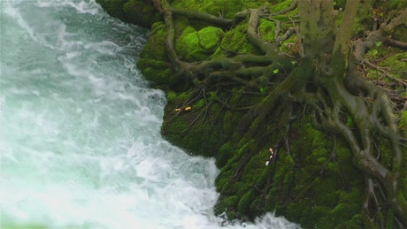 River running along the roots of a tree