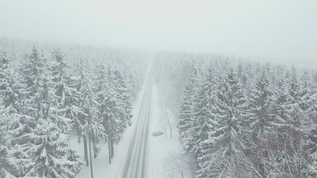 Road through a foggy winter forest