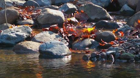 Rocks in a river in autumn