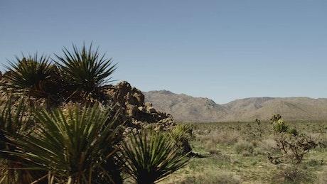 Rocky mound in the desert