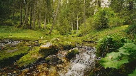 Rocky stream flows through mossy forest