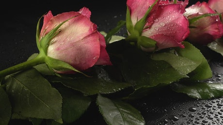 Romance details, pink roses