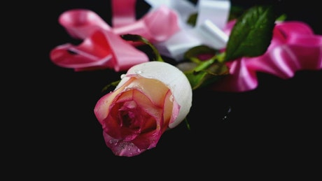 Romantic composition of a flower and ribbons