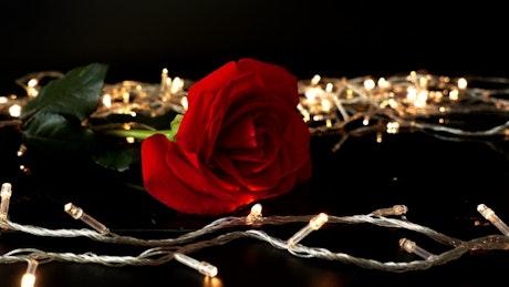 Rose and golden lights
