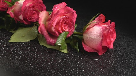 Roses on a black table with water drops