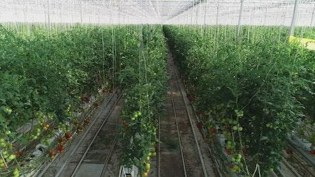 Rows of plants inside