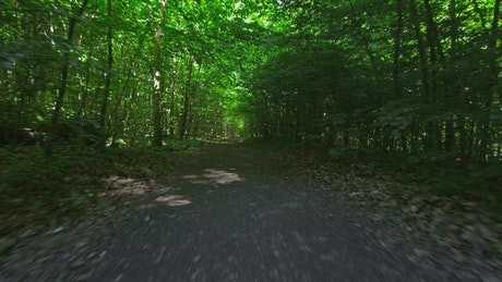 Running along a forest track