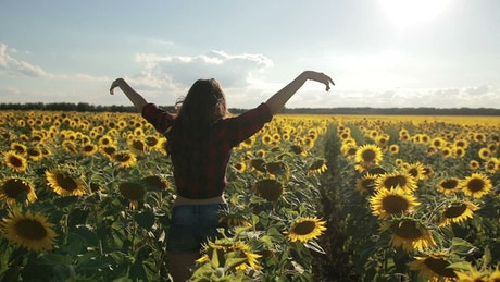 Running through Sunflowers