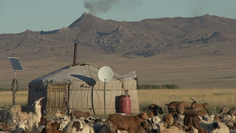 Rural home with goat cattle in the mountains