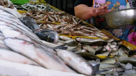 Saleswoman offering fresh fish