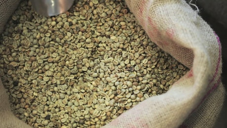 Scooping up coffee grains