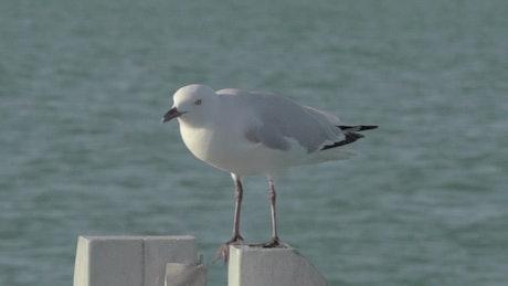 Sea bird taking flight