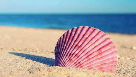 Sea shell on the sand near the seashore
