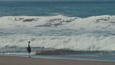 Seabird on the beach