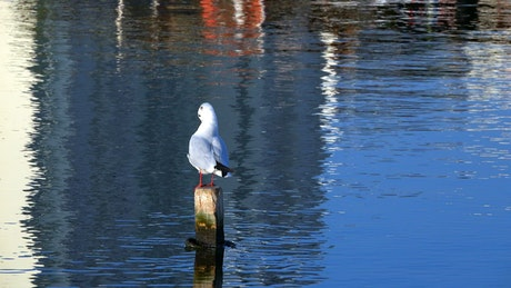 Seagull on the port