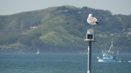 Seagull sitting on a lantern in the lake