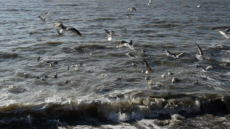 Seagulls at the shore