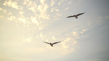 Seagulls coming in to land