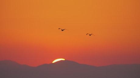 Seagulls flying against a bright orange sky