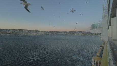 Seagulls flying alongside a Cruise Ship