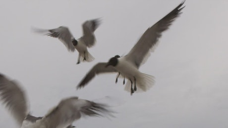 Seagulls flying before a storm