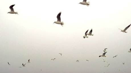 Seagulls flying in a clear sky