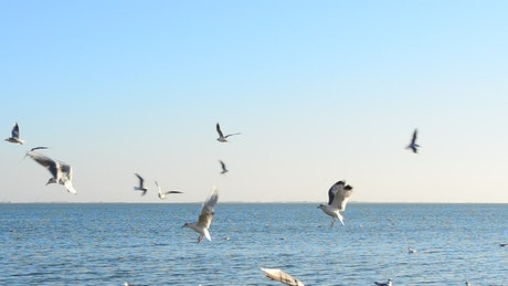 Seagulls flying in front of the sea on a sunny day