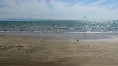Seagulls flying on a deserted beach