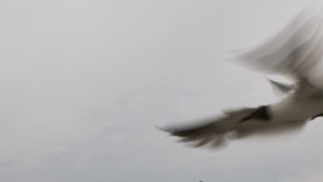 Seagulls flying on a rainy day
