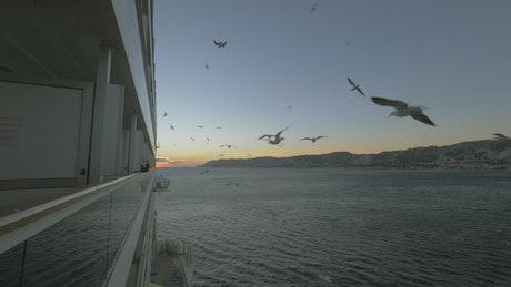 Seagulls following a passenger ship
