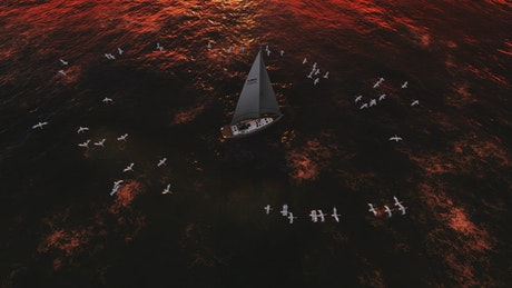 Seagulls spinning around a sailboat
