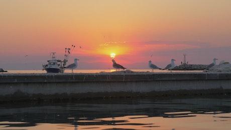 Seagulls standing on a pier