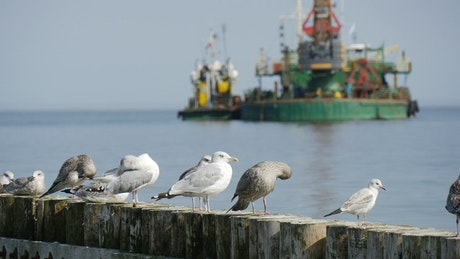 Seagulls standing on logs and ships in the background