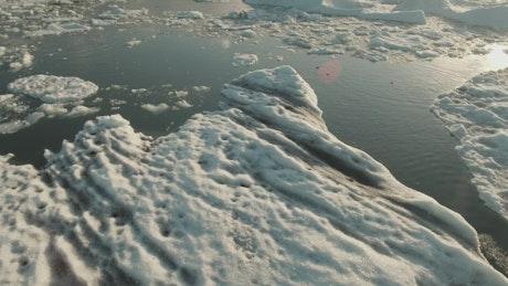 Seals swimming in a frozen ocean