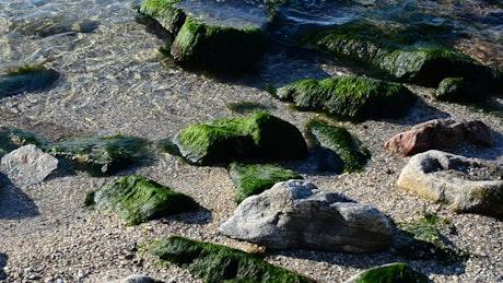 Seaweed covering small rocks