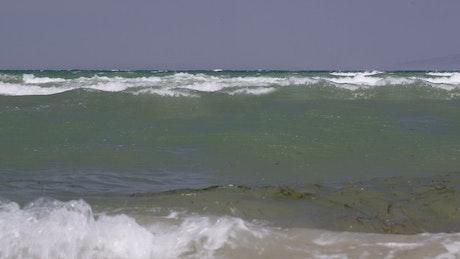 Seaweed floating in the waves