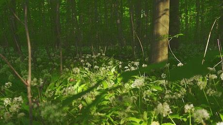 Shadows across the forest floor