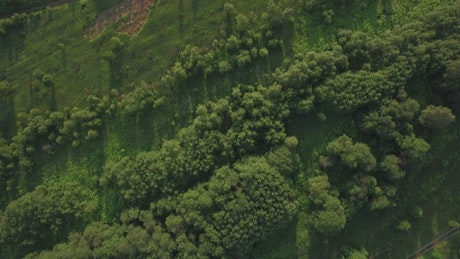 Shadows across woodland