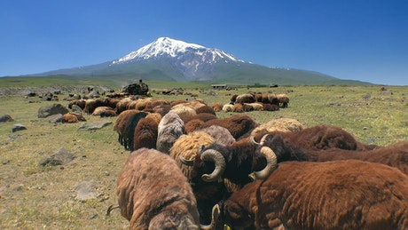 Sheep grazing in the mountain valley