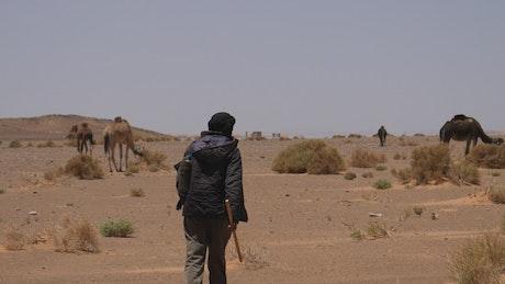 Shepherd walking towards his camels in the desert
