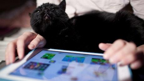 Shopping online using a touchscreen