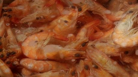 Shrimp in boiling water