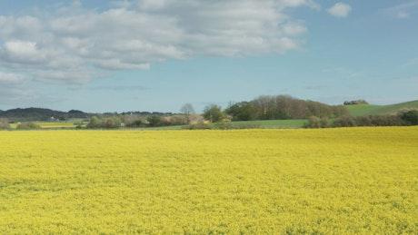 Sideways shot of farmland