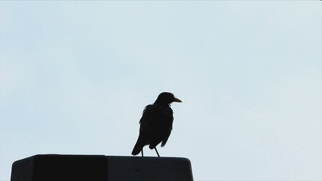 Silhouette of a bird against the sky