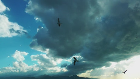 Silhouette of seagulls in the sky a cloudy day